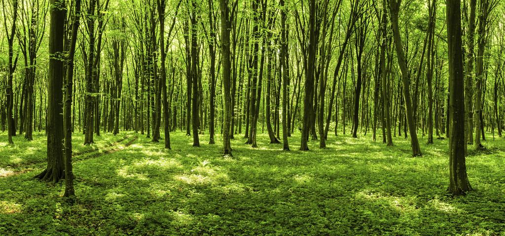 la forêt un enjeu environnemental et économique